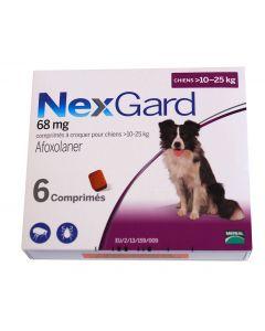 Nexgard Large Dog - Dogtor.vet