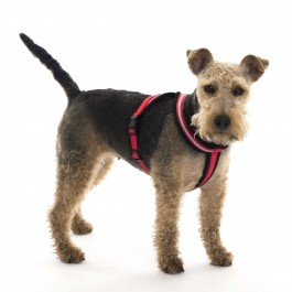 Comfy Harness - Extra Large - Dogtor