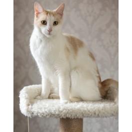 Gor Pets EasyFix Cat Scratcher - The Grand (130cm) - Dogtor
