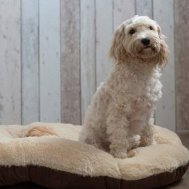 "Gor Pets Nordic Brown Oval Cushion - 24"" - Dogtor"