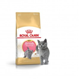 Royal Canin British Shorthair Kitten - Dogtor.vet