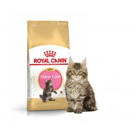 Royal Canin Kitten Maine Coon - Dogtor.vet