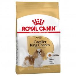 Royal Canin Adult Cavalier King Charles - Dogtor.vet
