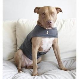 Thundershirt Medium - Dogtor.vet