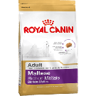 Royal Canin Adult Maltese - Dogtor.vet