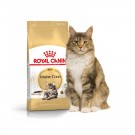 Royal Canin Adult Maine Coon - Dogtor.vet