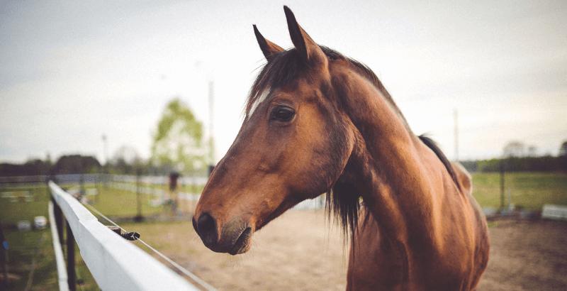 Comment bien gérer l'arthrose de son cheval ?