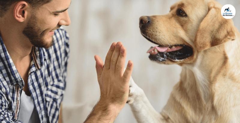 Protégez votre animal des insuffisances rénales avec Ipakitine