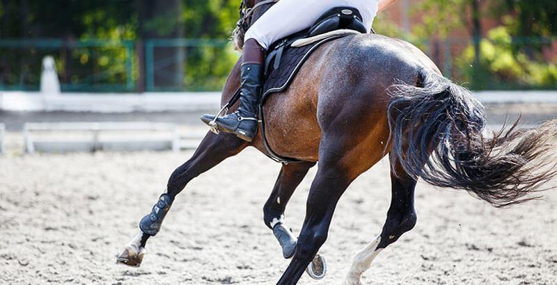 L'arthrose chez le cheval