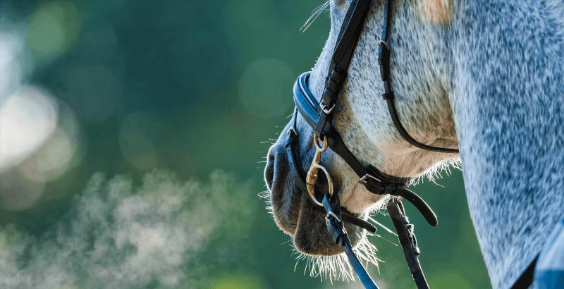 La nébulisation chez le cheval