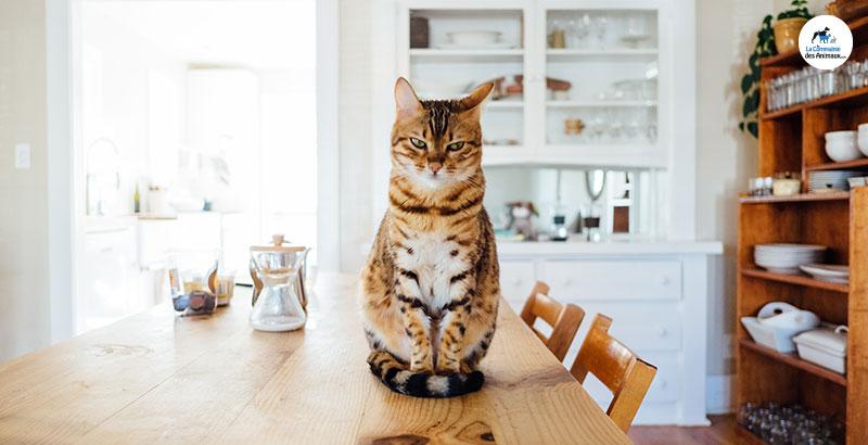 Les répulsifs pour chat