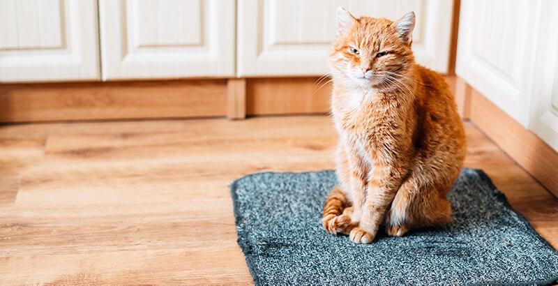 Les 7 causes les + fréquentes de malpropreté chez le chat