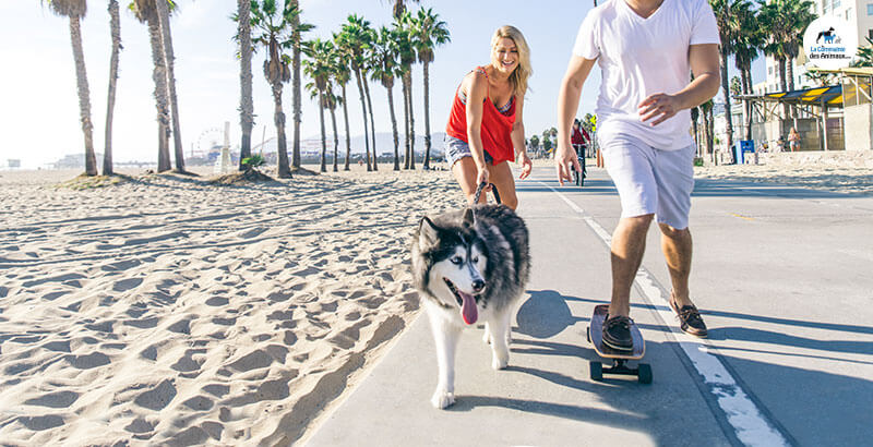 Comment occuper son chien à la plage ?