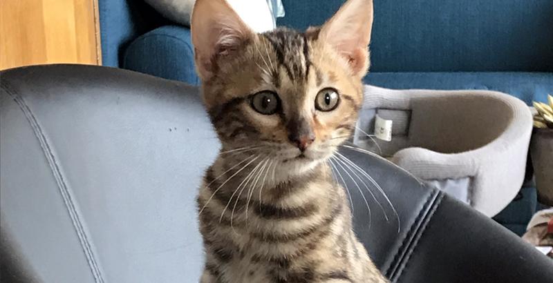 Interview - Mon chat est un Bengal