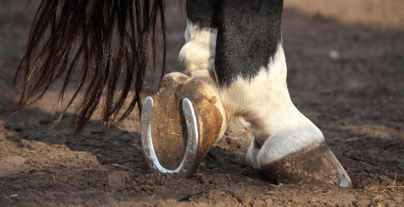 Comment soigner une seime chez le cheval ?