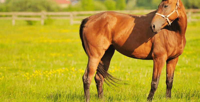 Pathologies des Jarrets chez les chevaux : Comprendre et soigner