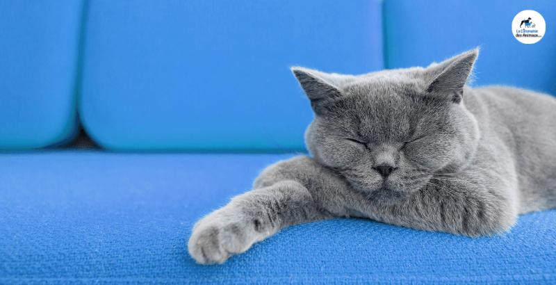 Quelles phéromones choisir pour mon chat ?