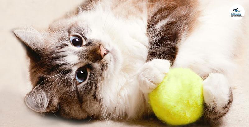 Quels sont les jouets dangereux pour son animal ?