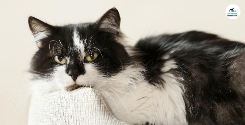 Comment nourrir son chat malade ?