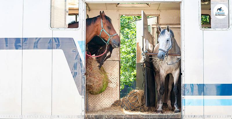 Comment transporter ses chevaux ?