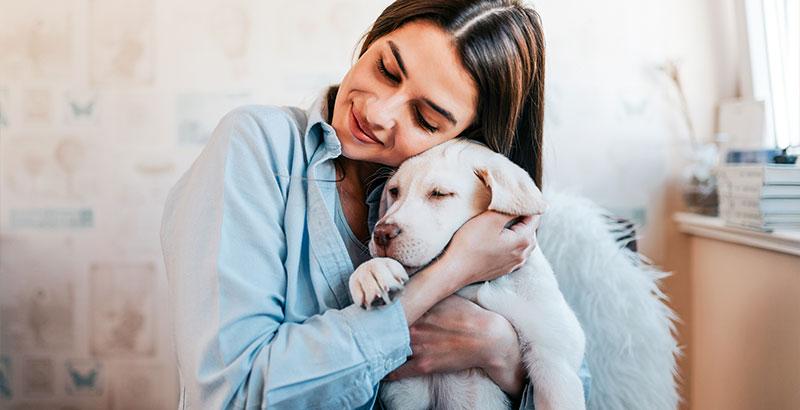 Comment masser son chien en 6 étapes ?