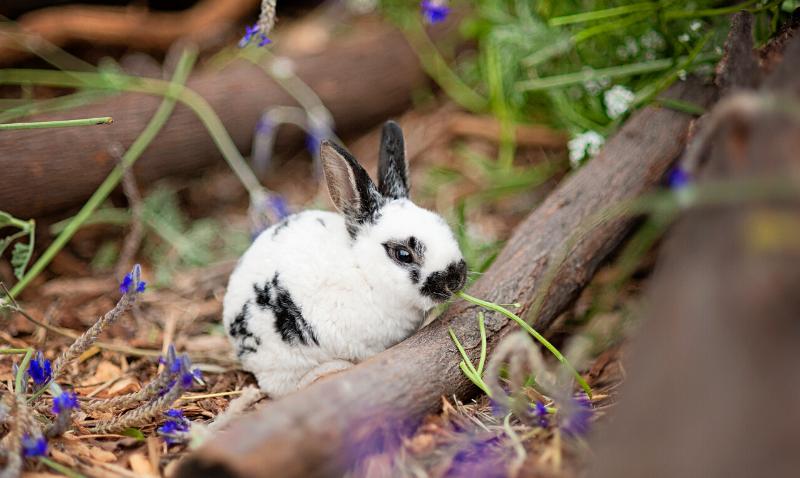 Mon lapin sort dans le jardin : faut-il le protéger contre les parasites ?