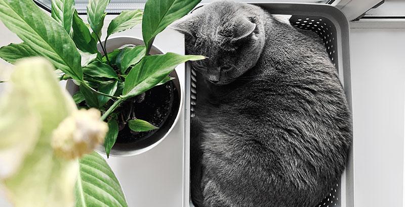 Votre chat a-t-il des comportements anormaux ?