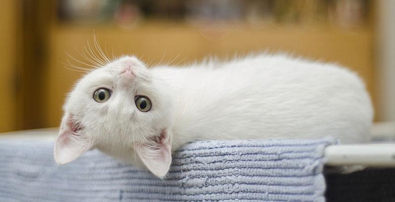Comment alimenter son chaton après le sevrage ?