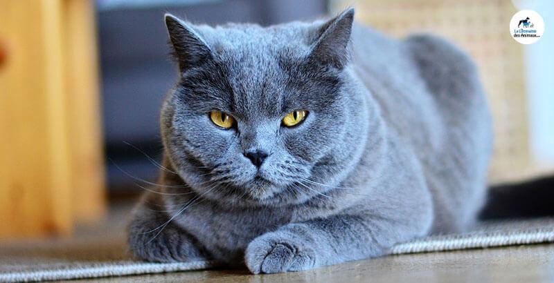 Vrai ou Faux : Les chats ne sont pas très utiles contre les rats