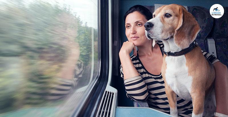 Comment voyager en train avec son animal ?