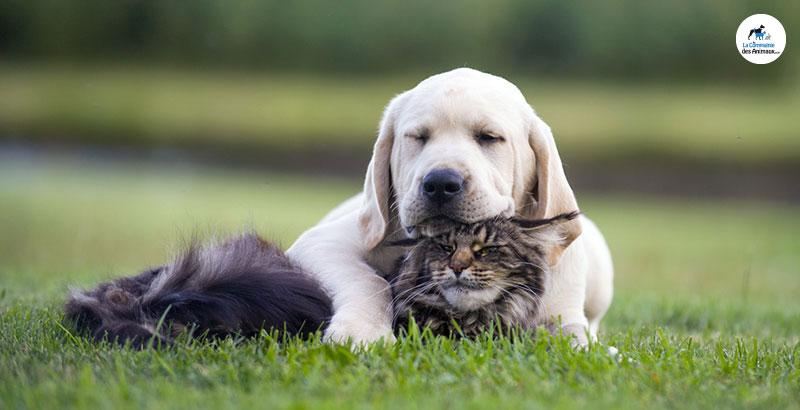 Comment aider votre animal atteint de maladie rénale ?
