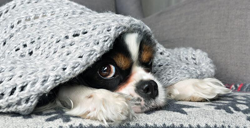 Comment aider son chien s'il a peur de l'orage et des pétards ?