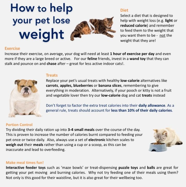 how to help your pet lose weight