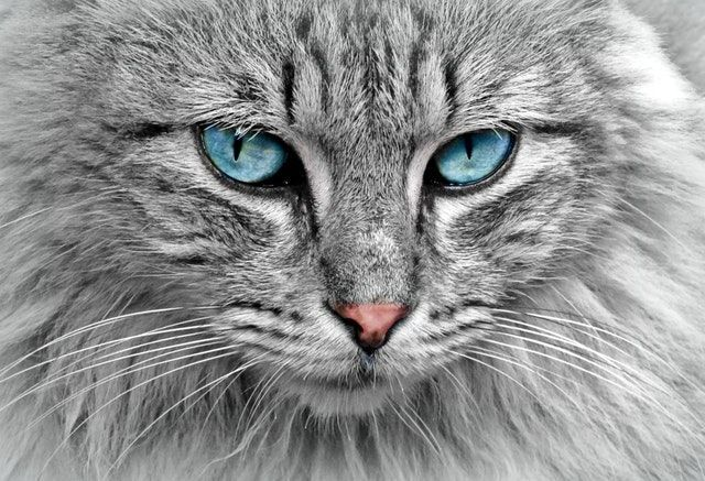 nice cat eyes