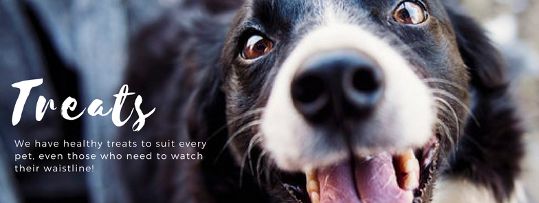 smiling collie dog