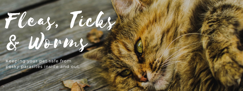 flea, ticks and worms
