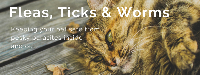 flea, ticks and worms