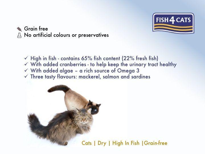 fish4cats summary